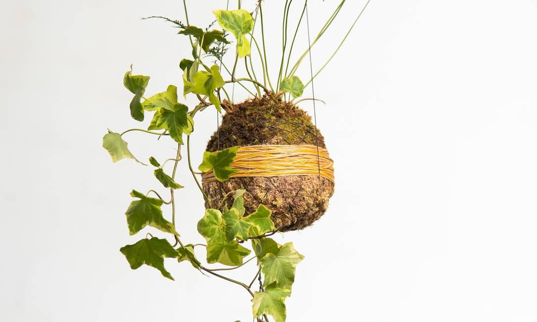 Decoração. Um dos coquedamas vendidos pela Janela Verde que estará ainda com terrários Foto: Erik Barros Pinto / Divulgação/ Erik Barros Pinto