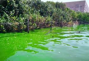 A água esverdeada das lagoas de Jacarepaguá Foto: Divulgação/Mario Moscatelli