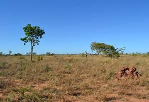 Desmatamento do Cerrado no estado do Tocantins aumentou 6,6 vezes em menos de uma década Foto: Ramon Felipe Bicudo da Silva, Michigan State University
