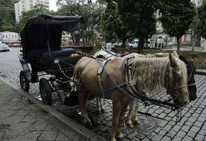 Cavalos das charretes do Museu Imperial em Petropolis Foto: Fábio Seixo/Agência O Globo