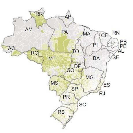 Mapa mostra a votação de Jair Bolsonaro (PSL) no primeiro turno. Foto: Editoria de Arte