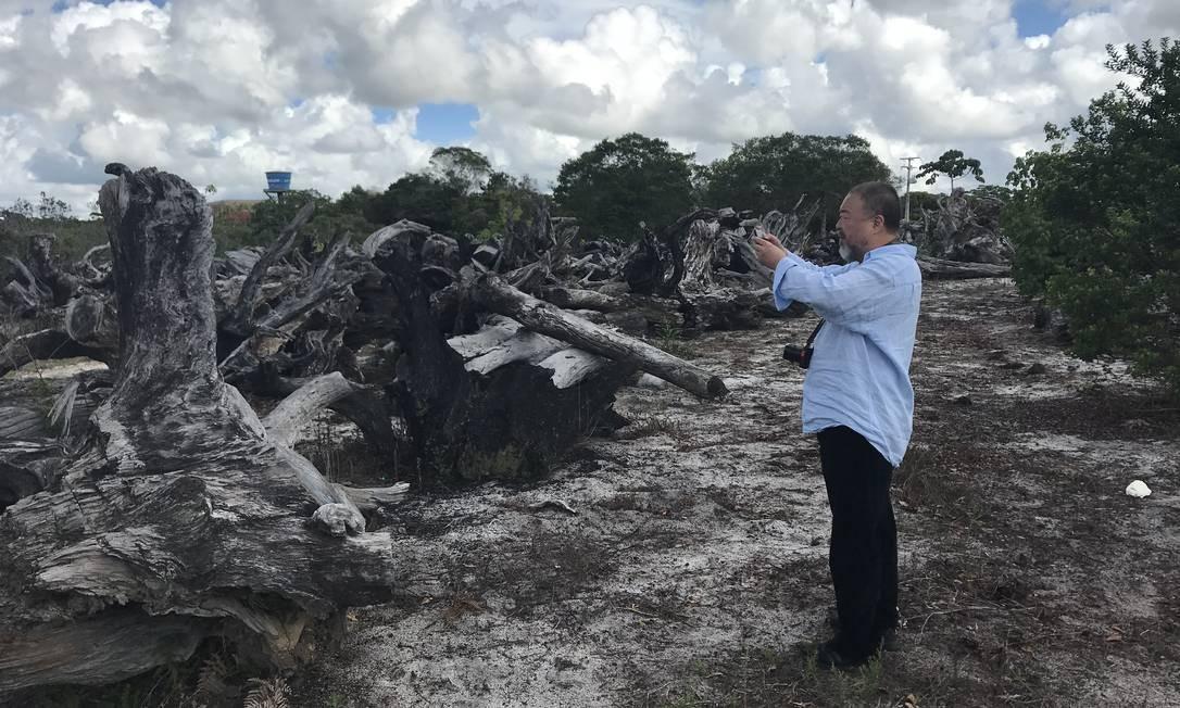 Ai Weiwei fotografa raízes do pequi-vinagreiro, espécie de árvore típica da Mata Atlântica baiana atualmente em risco de extinção Foto: Ai Weiwei Studio / Cortesia