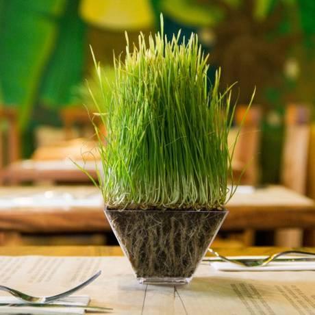 Broto de brócolis no centro de mesa do restaurante Brotto, em Botafogo Foto: Divulgação