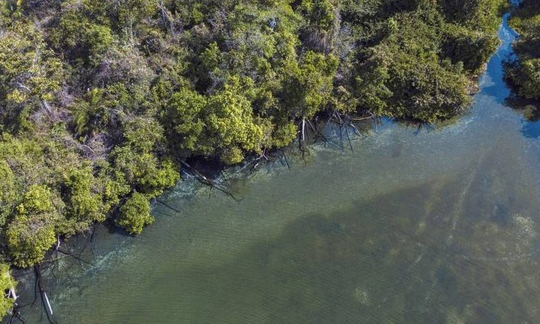 Dois terços da estrutura das plantas no cerrado estão abaixo da superfície Foto: Flavio Forner
