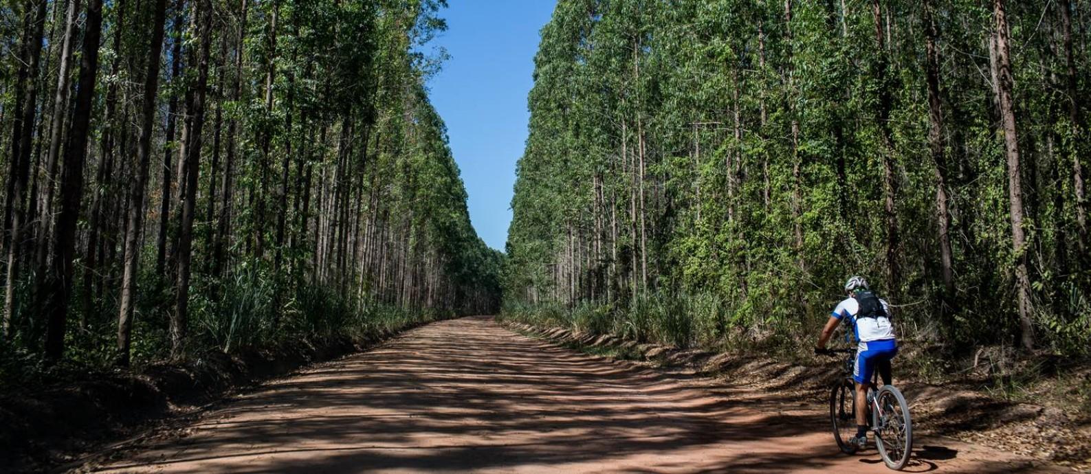 Trecho entre eucaliptos entre Espírito Santo e Bahia Foto: Flavio Forner