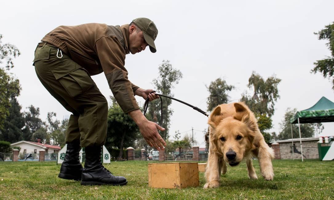 Cão participa de uma sessão de treinamento na escola Foto: MARTIN BERNETTI / AFP