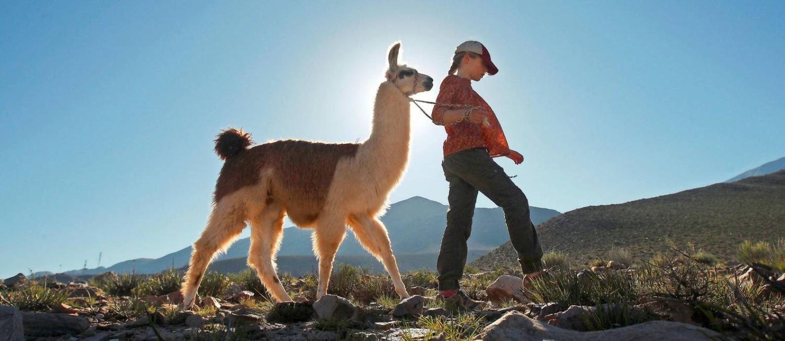 Em Tilcara, na Argentina, visitantes saem em caravanas em passeios de lhama Foto: El Mercurio/Chile/GDA / Cristian Carvallo
