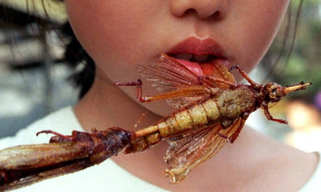 Ricos em proteínas, insetos são consumidos no mundo todo Foto: Natalie Behring / Reuters