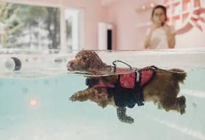 Cachorro pratica natação em pet shop de Xangai Foto: YUYANG LIU / NYT