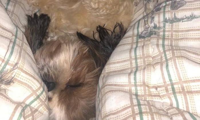 Tufão, o cão da senadora Kátia Abreu (PDT-TO) Foto: Reprodução/Twitter