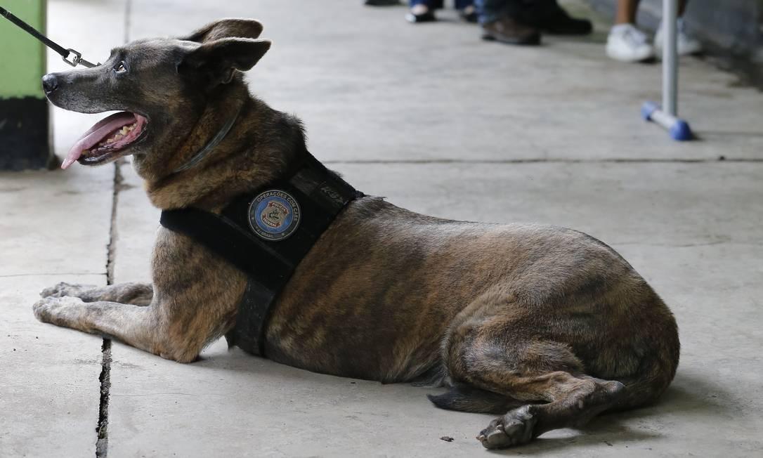 Cães farejadores foram usados na checagem de equipamentos Foto: Pablo Jacob / Agência O Globo