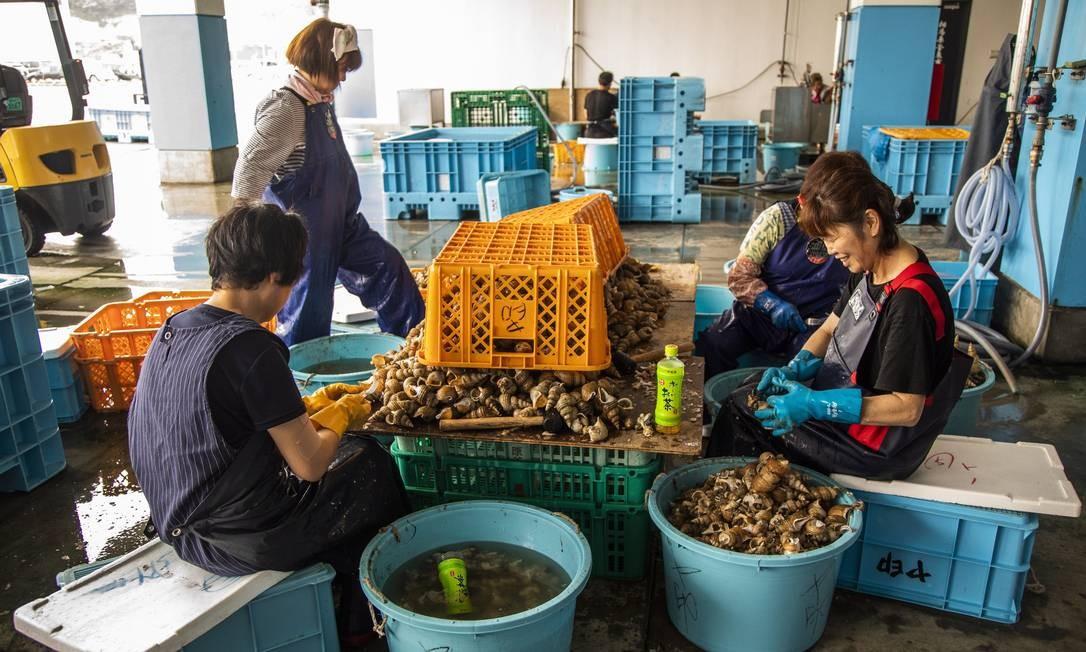 Na Associação Cooperativa de Pesca | Estação Experimental de Pesca da Província de Fukushima Soma Branch, ocorre a descarga de peixes, com inspeção voluntária de radiação. A atividade pesqueira está sendo retomada Foto: Bárbara Lopes / Agência O Globo