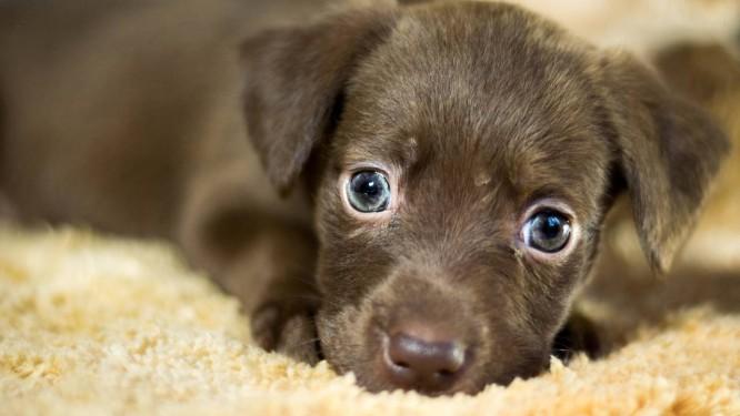 Cães em geral, mas particularmente filhotes, despertam mais empatia Foto: Pixabay