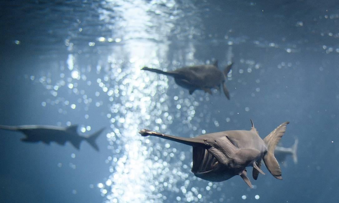 Peixes nadam em um aquário no Aquatis, o maior viveiro de aquários de água doce da Europa, em 7 de novembro de 2018 em Lausanne. FABRICE COFFRINI / AFP