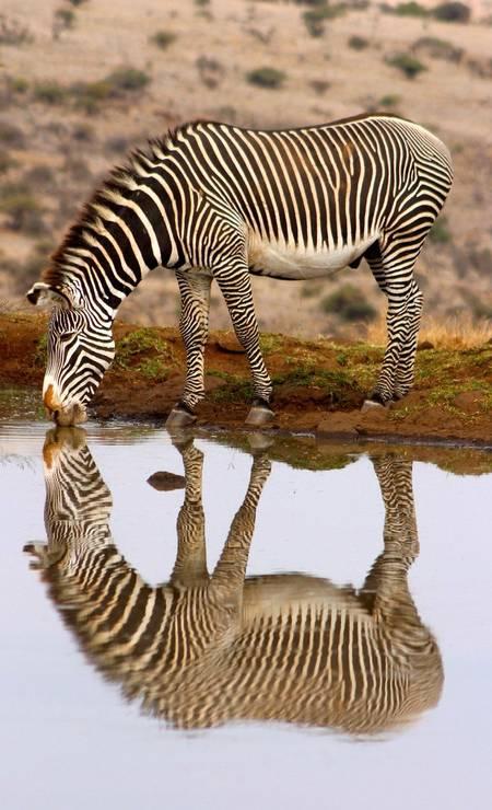 Imogen Smith, 17 anos, fotografou esta zebra na Reserva Lewa, no Quênia. Foto: .