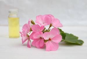 Óleo essencial de gerânio: bom para TPM Foto: Shutterstock