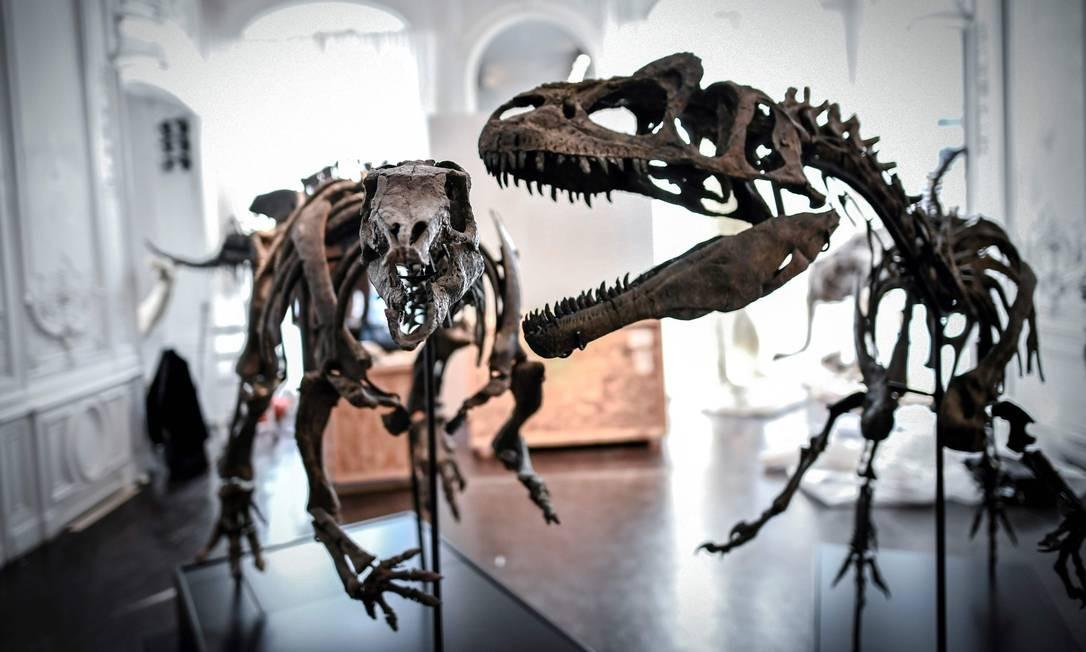 Um esqueleto do Camptossauro e um Allosaurus são exibidos em 13 de novembro de 2018 na casa de leilões Artcurial em Paris Foto: STEPHANE DE SAKUTIN / AFP