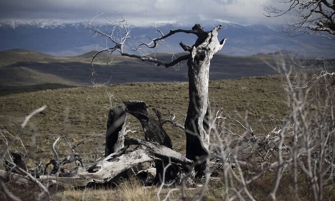 BV Chile 09/11/2018 Parque Nacional Torres del Paine, na Patagônia chilena. Na foto, cemitério de árvores do incêndio que destruiu quase 14 mil hectares do parque, em 2005 Foto: Márcia Foletto / Márcia Foletto