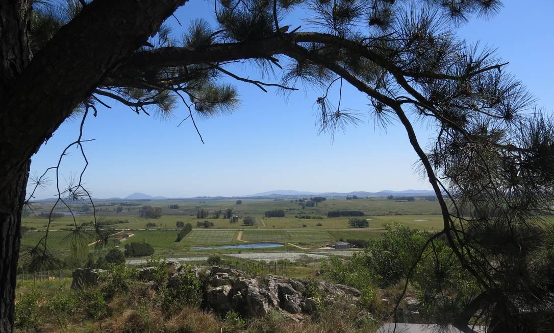Cenário da Bodega Alto de La Ballena, em Punta Ballena (Maldonado): vinícola é a que fica mais próxima de Punta de Este Foto: Elisa Torres / .
