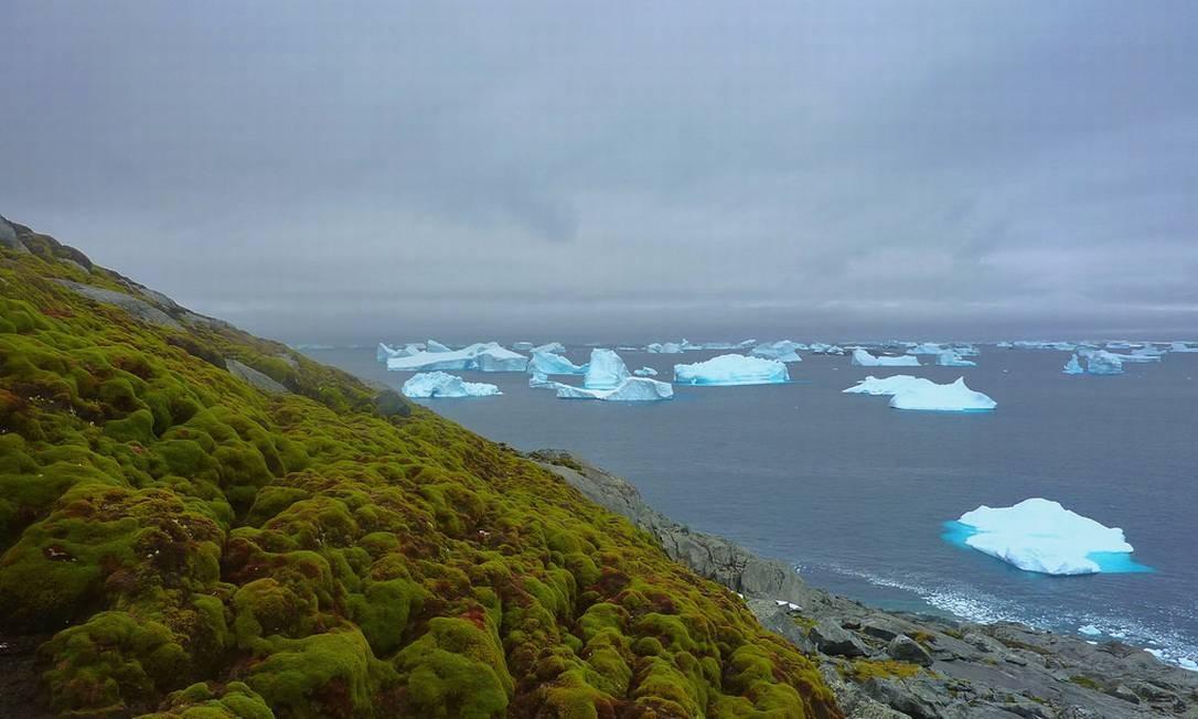 Antártica tem cada vez mais áreas verdes por causa do aquecimento global Foto: Matt Amesbury