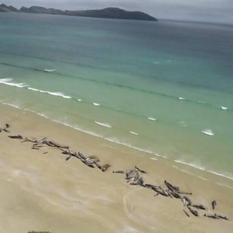 Baleias-piloto mortas espalhadas por vários quilêmetros em uma praia da Nova Zelândia Foto: Reprodução/Departamento de Conservação da Nova Zelândia