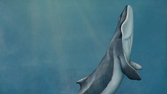Ilustração de como seria essa antiga baleia Foto: Arte