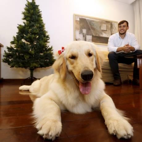 A cadela Mel foi encontrada nesta quarta-feira Foto: Marcelo Theobald / Agência O Globo