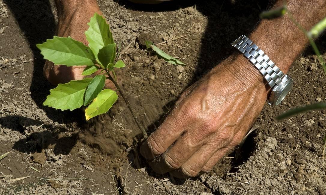Parceiro da TNC planta muda de árvore em Extrema, sul de Minas Gerais. Região de Mata Atlântica na Serra da Mantiqueira é uma das áreas prioritárias para o projeto de restauração florestal Foto: ©Adriano Gambarini / ©Adriano Gambarini