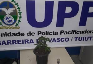 Um planta, que a polícia acredita que seja maconha, foi encontrada na residência em que PL se escondia Foto: Divulgação/ Pmerj