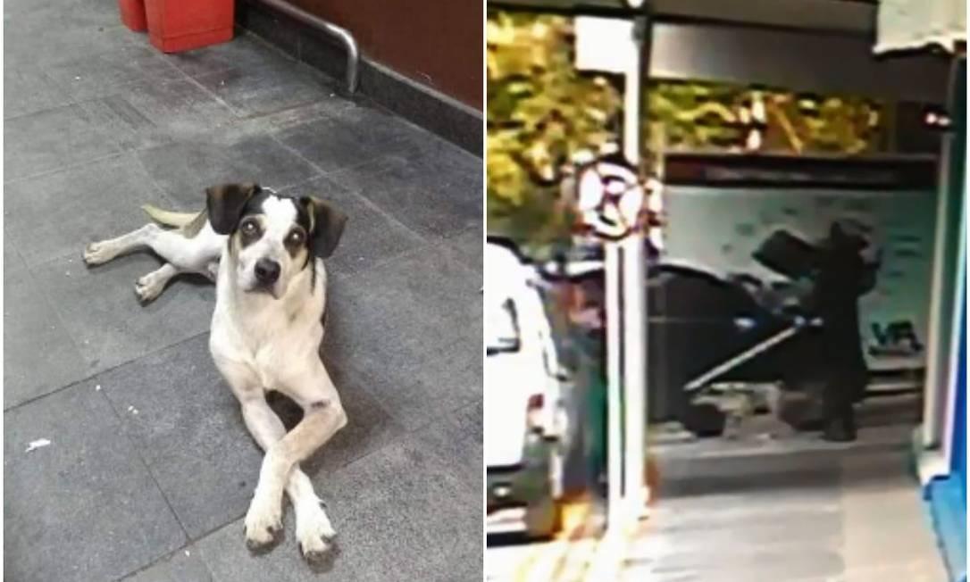 Cadela foi morta no Carrefour em Osasco (SP) Foto: Reprodução