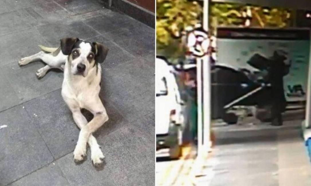 Cachorro foi morto no Carrefour em Osasco (SP) Foto: Foto: Reprodução