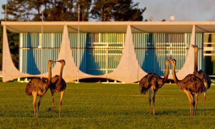 Emas no Palácio da Alvorada Foto: Ichiro Guerra / Presidência da República