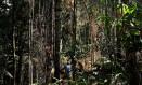 Homem corta árvore em floresta no Pará, um dos estados que lideram no desmatamento de unidades de conservação Foto: NACHO DOCE / Agência O Globo