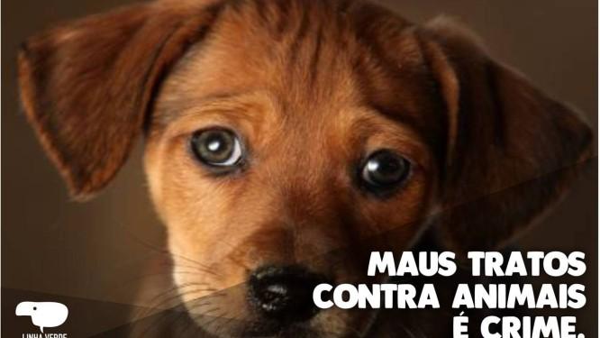Denúncias de maus tratos contra animais aumentam Foto: Divulgação