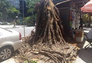 O que restou. Retirada de raízes e troncos será feita nos próximos dias pela Comlurb Foto: Patricia de Paula