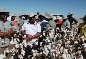 Treinamento. Africanos participam de curso em Lavras, Minas Gerais, sobre a cultura do algodão: cooperação técnica Sul-Sul abrange 57 países Foto: Douglas Vaz / Divulgação/Universidade Federal de Lavras