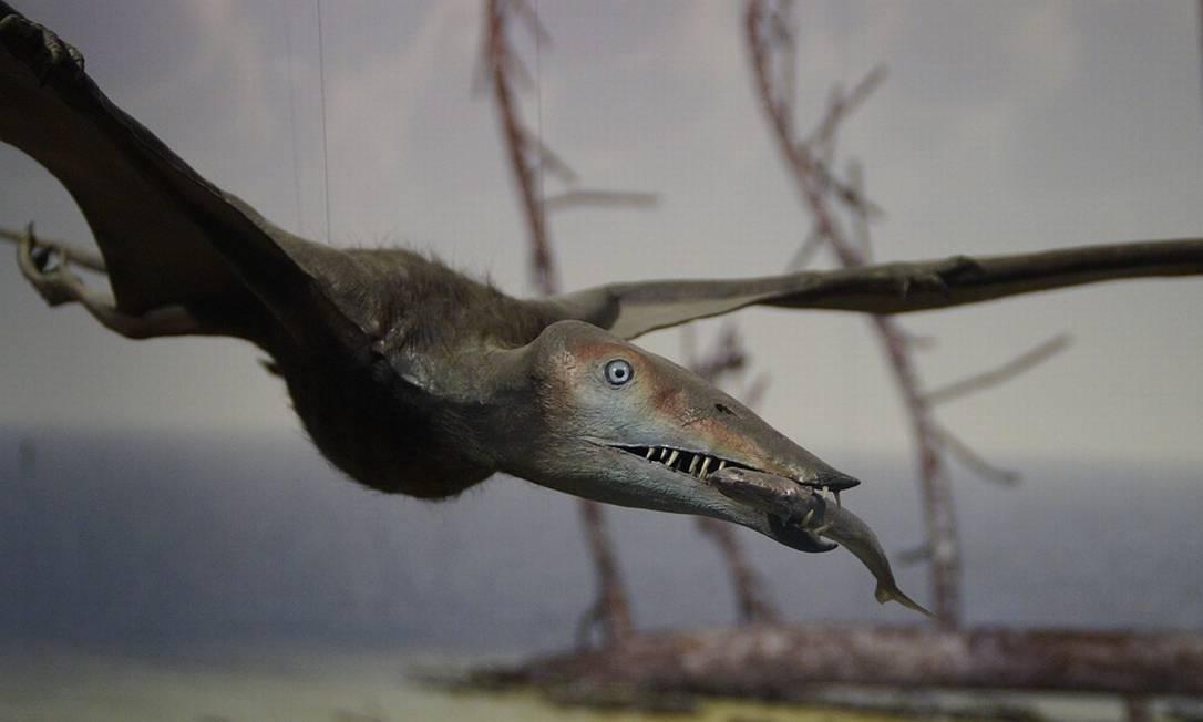 Pterossauros tinham penas em tom castanho-avermelhado, revela pesquisa Foto: Pixabay/Pixabay
