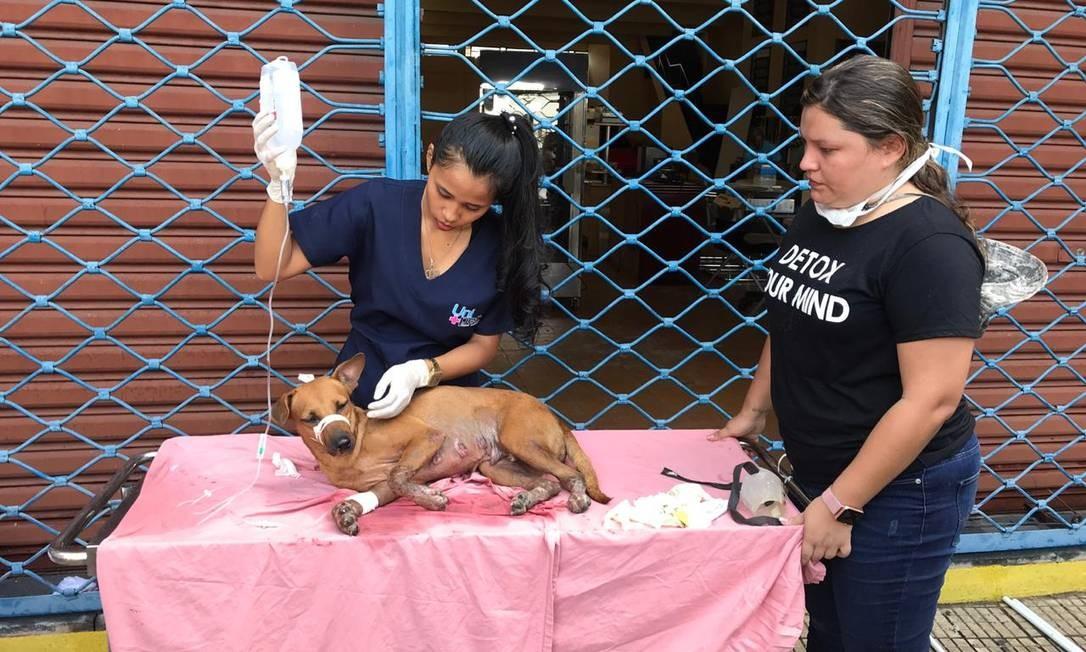 Atendimento improvisado a animais vítimas de incêndio em Manaus Foto: Matheus Ponce