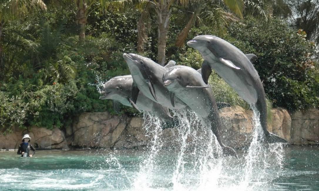 Golfinhos juntos no mar: um grupo não quer nem saber do outro Foto: Free Images