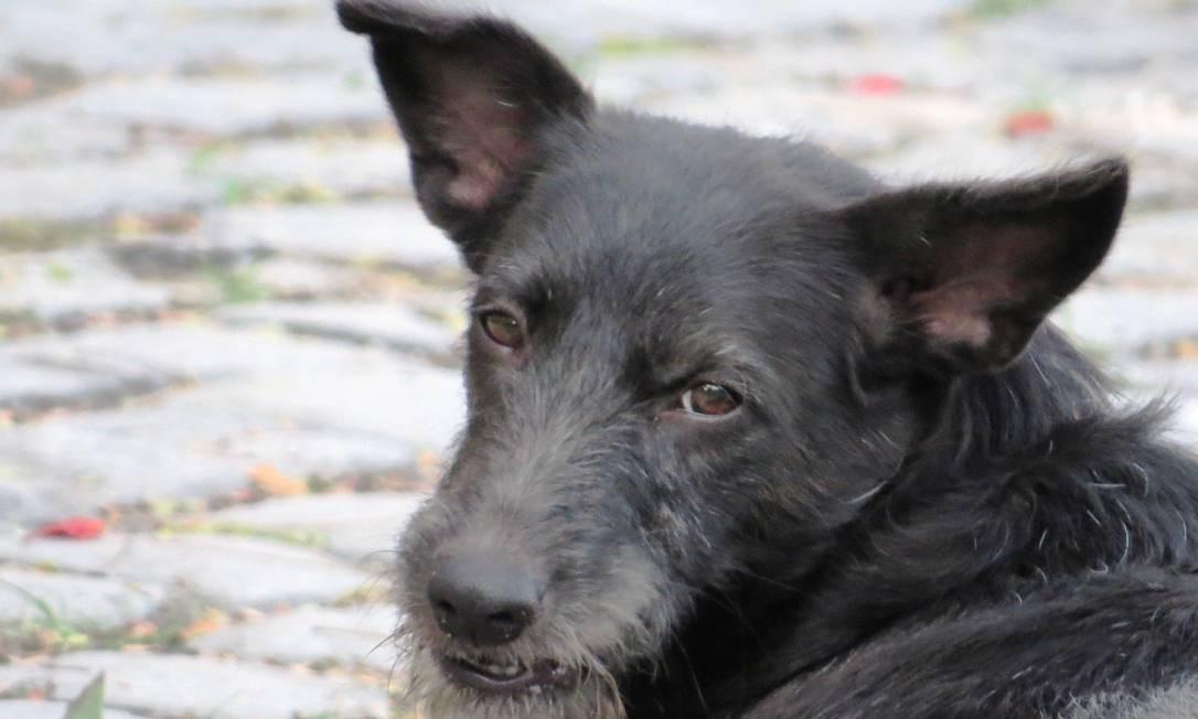 Charme vira-lata: cãozinho Fumaça é adotado por pesquisadores Foto: Marcos Gusmão / Divulgação