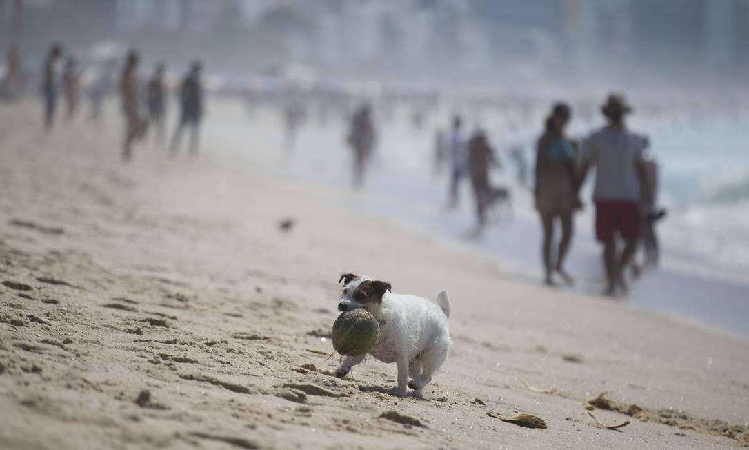 Com um coco na boca, cachorro passeia na areia na Praia do Leblon Foto: Márcia Foletto / Agência O Globo