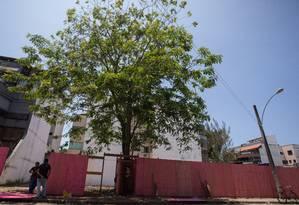 """A """"Cassia grandis"""" diante da obra em andamento na Rua Taciel Cylleno, no Recreio Foto: Emily Almeida / Agência O Globo"""
