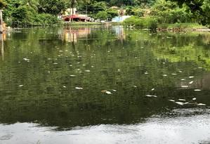 Peixes mortos apareceram no espalho d'água na última quarta-feira. Foto: Divulgação/Cecron