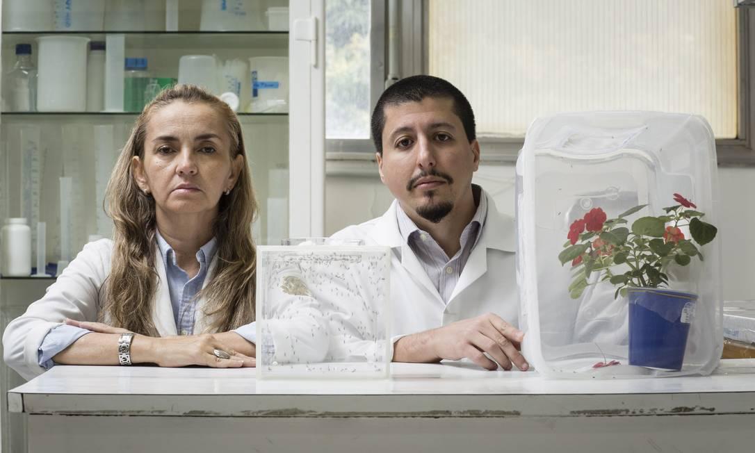 Sem recursos, Georgia Atella foi obrigada a suspender um estudo sobre a alimentação do 'Aedes aegypti' e sofreu baixas na equipe, como a saída do pesquisador de pós-doutorado Rodrigo Nunes, que se mudou para os EUA Foto: / Fernando Lemos/23-06-2017