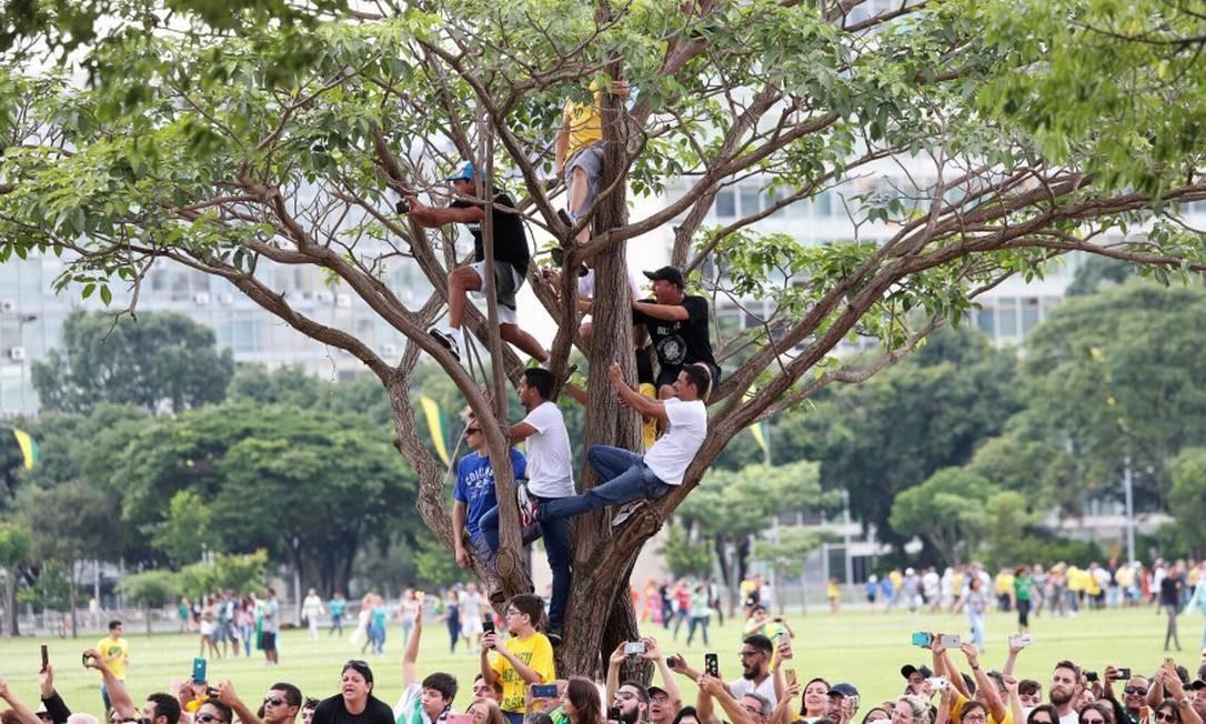 Eleitores pendurados em uma árvore para conseguir ver a chegada de Jair Bolsonaro no Congresso Nacional Foto: RICARDO MORAES / REUTERS