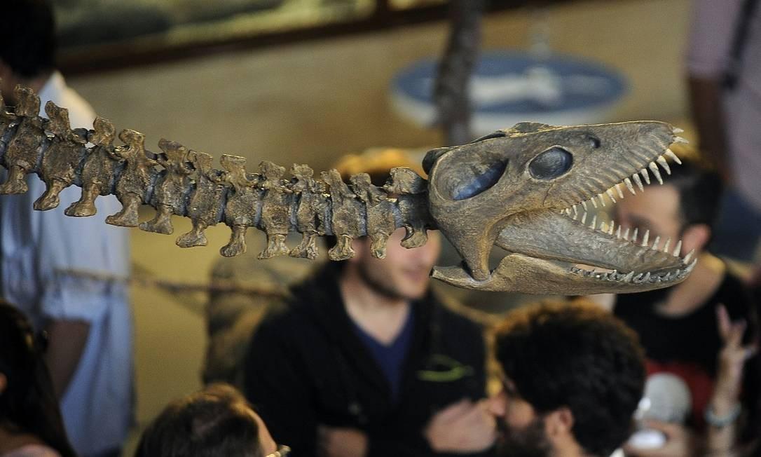 Trata-se do esqueleto quase completo de um plesiossauro, um animal marinho que viveu há 65 milhões e que agora está exposto no Museu Argentino de Ciências Naturais Foto: JAVIER GONZALEZ TOLEDO / AFP