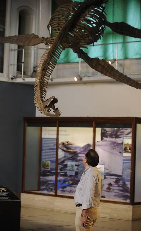 A complexidade do trabalho de preparação do fóssil e criação da réplica foi o motivo pelo qual o animal demorou tanto para ser exposto no museu Foto: JAVIER GONZALEZ TOLEDO / AFP