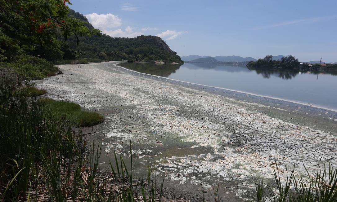 Peixes mortos se decompõem em meio ao esgoto às margens da Lagoa de Piratininga Foto: Pedro Teixeira / Agência O Globo