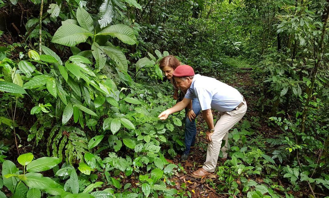 Maria Raquel e Nicholas Locke, donos da Reserva Ecológica de Guapiaçu (Regua) Foto: Ana Lucia Azevedo