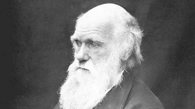 No século XIX, Charles Darwin criou a Teoria da Evolução Foto: Reprodução / Pixabay